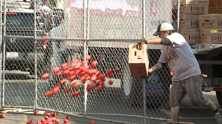 'Bigger, messier, tastier:' Coordinated chaos for a great cause at 13th annual Tomato Romp